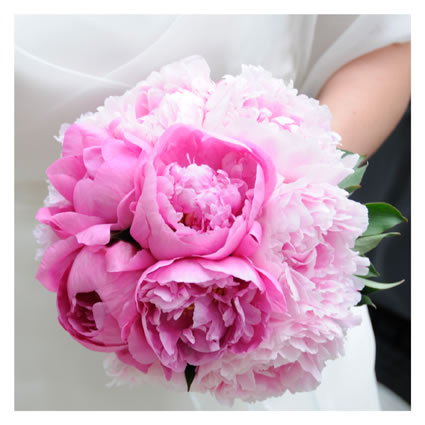 1000+ images about rosa wedding on Pinterest  Bouquets ...